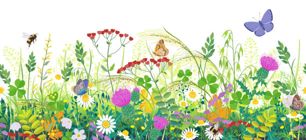 Seamless Border with Summer Meadow Plants  and Insects Seamless horizontal border with summer meadow plants and insects. Green grass, colorful wild flowers, bumblebees and butterflies on white background. Floral natural pattern vector flat illustration. bee borders stock illustrations
