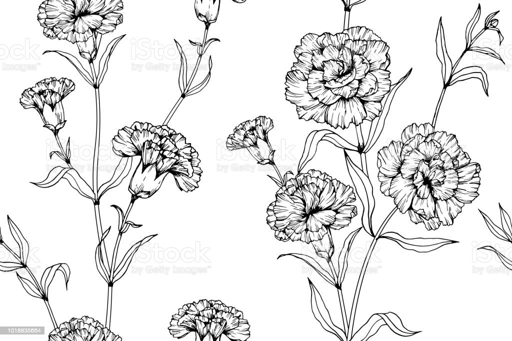 Seamless Carnation flower pattern background. Black and white with drawing line art illustration.