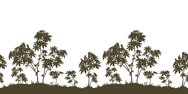 stockillustraties, clipart, cartoons en iconen met seamless, castor plants and grass silhouette - kruisbloemenfamilie