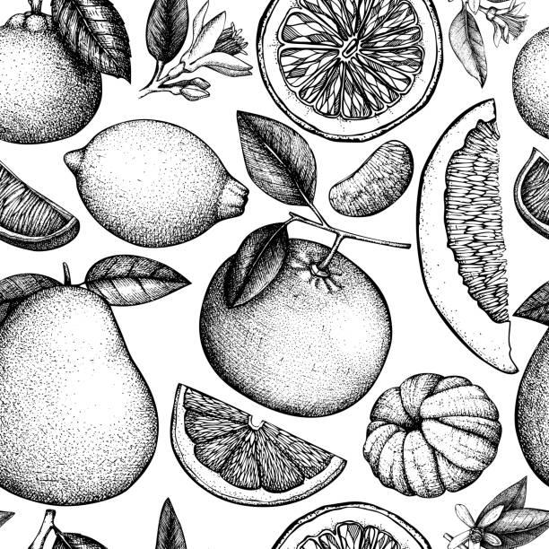 illustrations, cliparts, dessins animés et icônes de modèle d'agrumes sans soudure - infusion pamplemousse