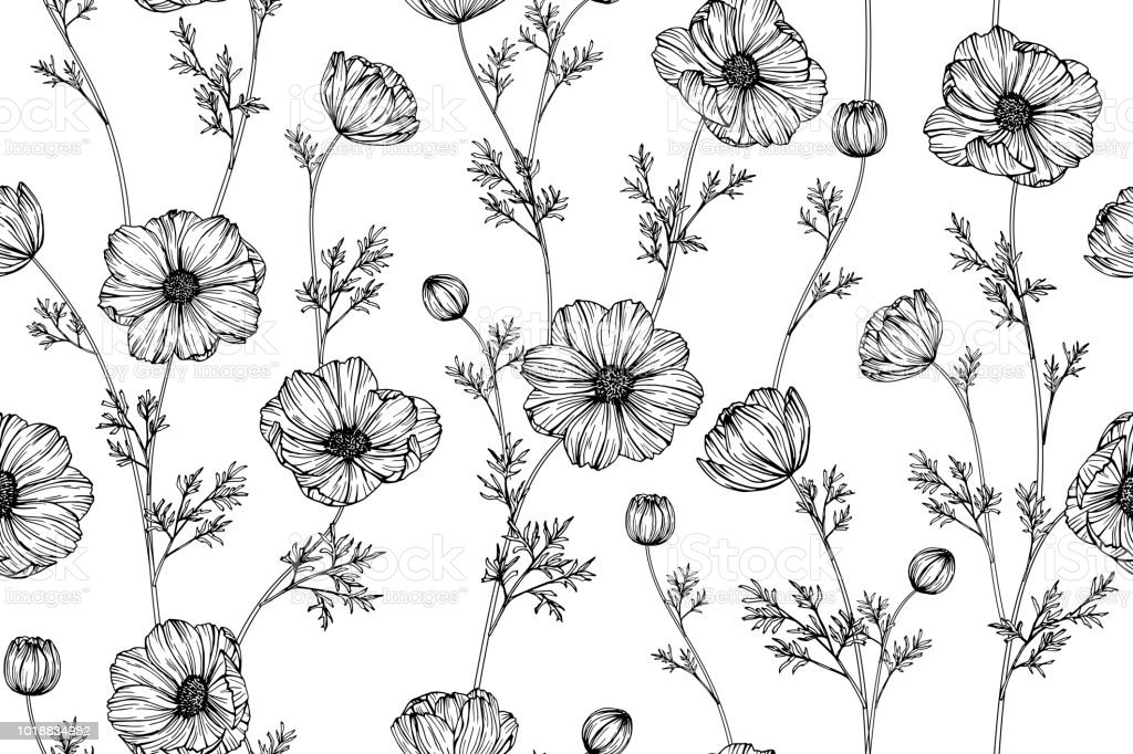 Seamless Cosmos Flower Pattern Background Black And White With ...