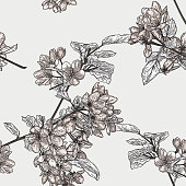 Beautiful vintage line art of the branches of a crabapple tree that form a seamless pattern.