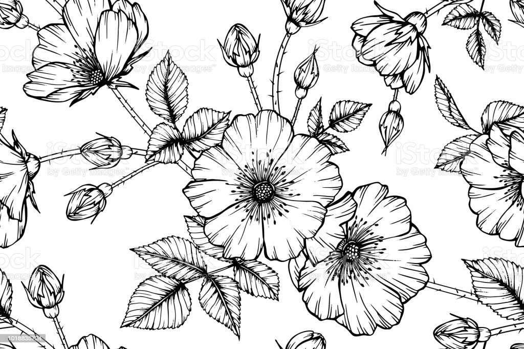 Fond Fleur Eglantier Sans Soudure Noir Et Blanc Avec Dessin