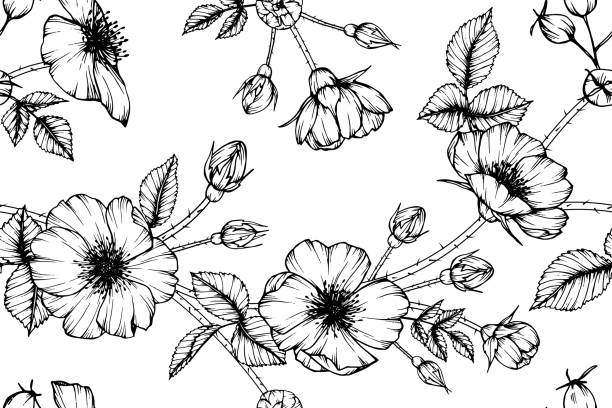 Royalty free clip art of a floral border black white roses clip art seamless dog rose flower pattern background black and white with drawing line art illustration mightylinksfo
