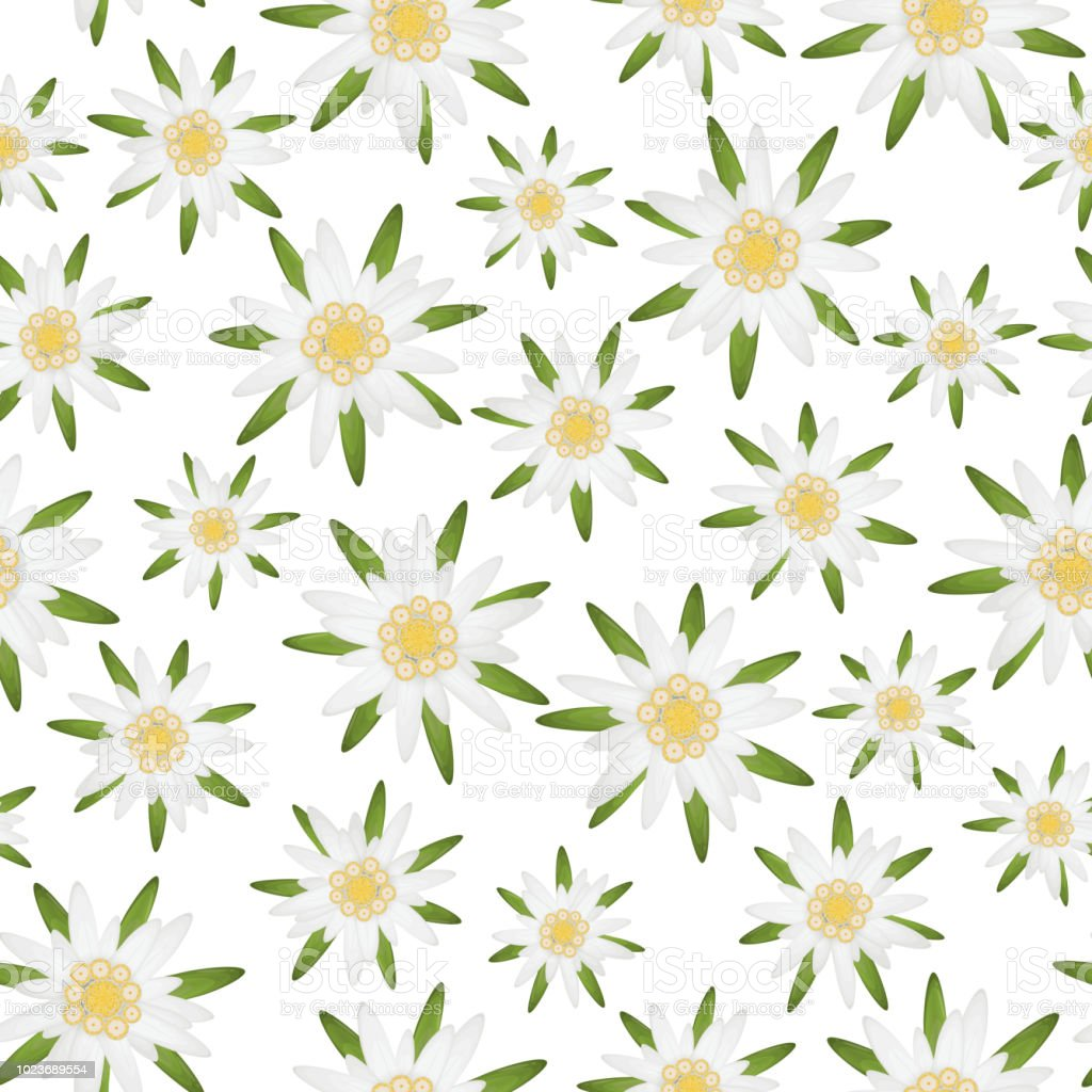 Fond Fleur Edelweiss Sans Soudure Cliparts Vectoriels Et Plus D