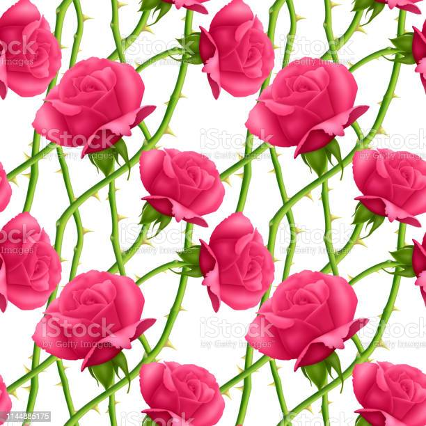 Seamless endless pattern with roses and thorns bright pink roses on vector id1144885175?b=1&k=6&m=1144885175&s=612x612&h=j uw3ns ybrhnyif5jgabw2klmtlzxhmzxiak1szf4o=
