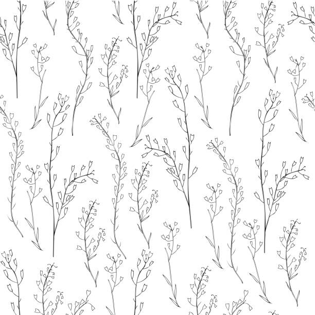 Seamless floral pattern, Capsella flower, Shepherd's purse, Capsella bursa-pastoris, the entire plant, hand drawn vector ink sketch isolated on white, for design cosmetics, textile, natural fabric Seamless floral pattern, Capsella flower, Shepherd's purse, Capsella bursa-pastoris, the entire plant, hand drawn vector ink sketch isolated on white, for design cosmetic, textile, natural fabric shepherd's purse stock illustrations