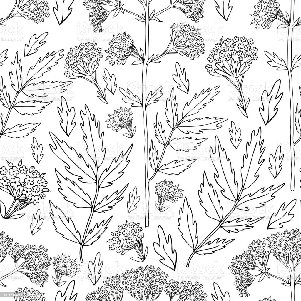 Seamless Floral Pattern Valeriana Officinalis Hand Drawn Vector Ink