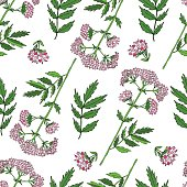 Seamless floral pattern, Valeriana officinalis hand drawn vector colorful illustration isolated on white background, for design package cosmetic, organic medicine, greeting card, herbal green tea