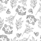 Seamless floral pattern, Valeriana officinalis hand drawn vector illustration isolated on white background, line art for design package cosmetic, organic medicine, greeting cards, herbal green tea