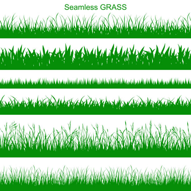 stockillustraties, clipart, cartoons en iconen met naadloze gras - grasspriet