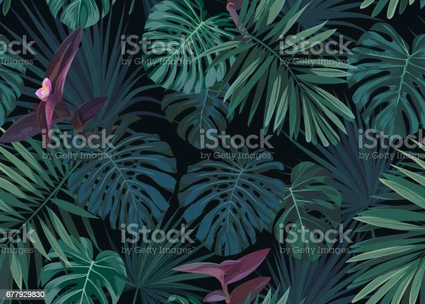 Seamless hand drawn botanical exotic vector pattern with green palm vector id677929830?b=1&k=6&m=677929830&s=612x612&h=lg6xi m7qeil6hwqipndxezlo0xb 2xtfqplr5q1oxa=