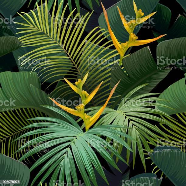 Seamless hand drawn tropical vector pattern with bird of paradise vector id996078976?b=1&k=6&m=996078976&s=612x612&h=xt64exaiwagoi6z5oyrrv8jovv9t2ay qeaykerq6lc=