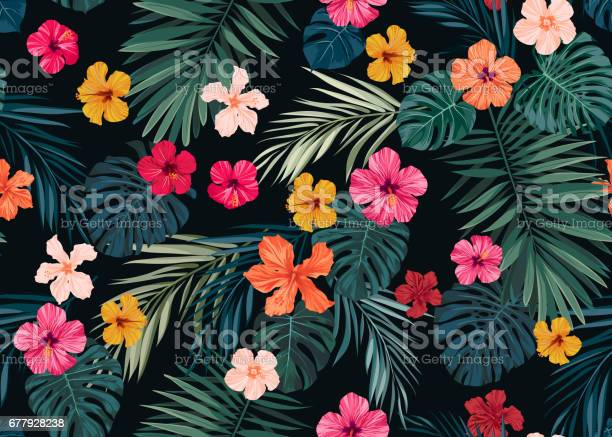Seamless hand drawn tropical vector pattern with bright hibiscus and vector id677928238?b=1&k=6&m=677928238&s=612x612&h=orijntzfccu6a69u7gmgmgy0mphe5ptqgxkyxxzxtj4=