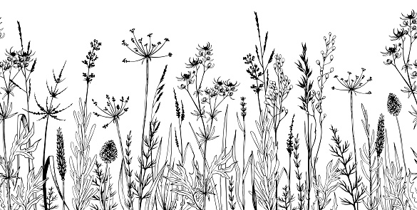 Seamless horizontally background with wild plants, herbs and flowers. Hand drawn botanical illustration isolated on white.