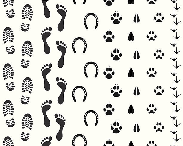 Seamless Human and Animal Footprints Vector illustration of seamless human and animal footprints.  horseshoe stock illustrations