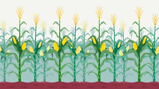 nahtlose isoliert kornfeld - herbstgemüseanbau stock-grafiken, -clipart, -cartoons und -symbole