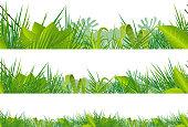 Seamless Jungle And Tropical Vegetation