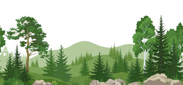 Seamless Landscape with Trees Seamless Horizontal Summer Mountain Landscape with Pine, Birch and Fir Trees, Green Grass on the Rocks. Vector woodland stock illustrations