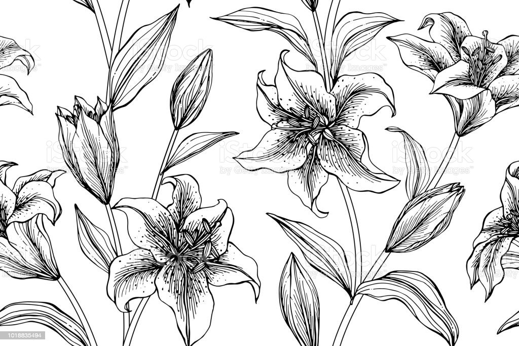 Seamless Lily Flower Pattern Background Black And White With Drawing ...