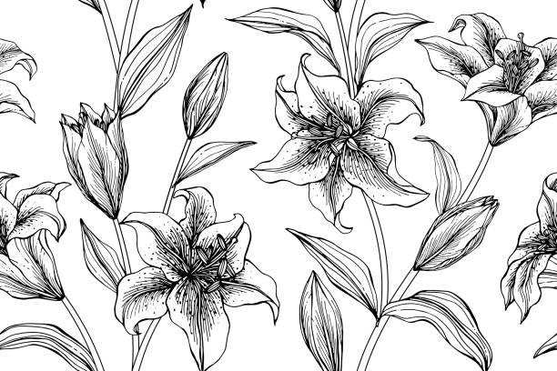Seamless Lily flower pattern background. Black and white with drawing line art illustration. Seamless Lily flower pattern background. Black and white with drawing line art illustration. lily stock illustrations