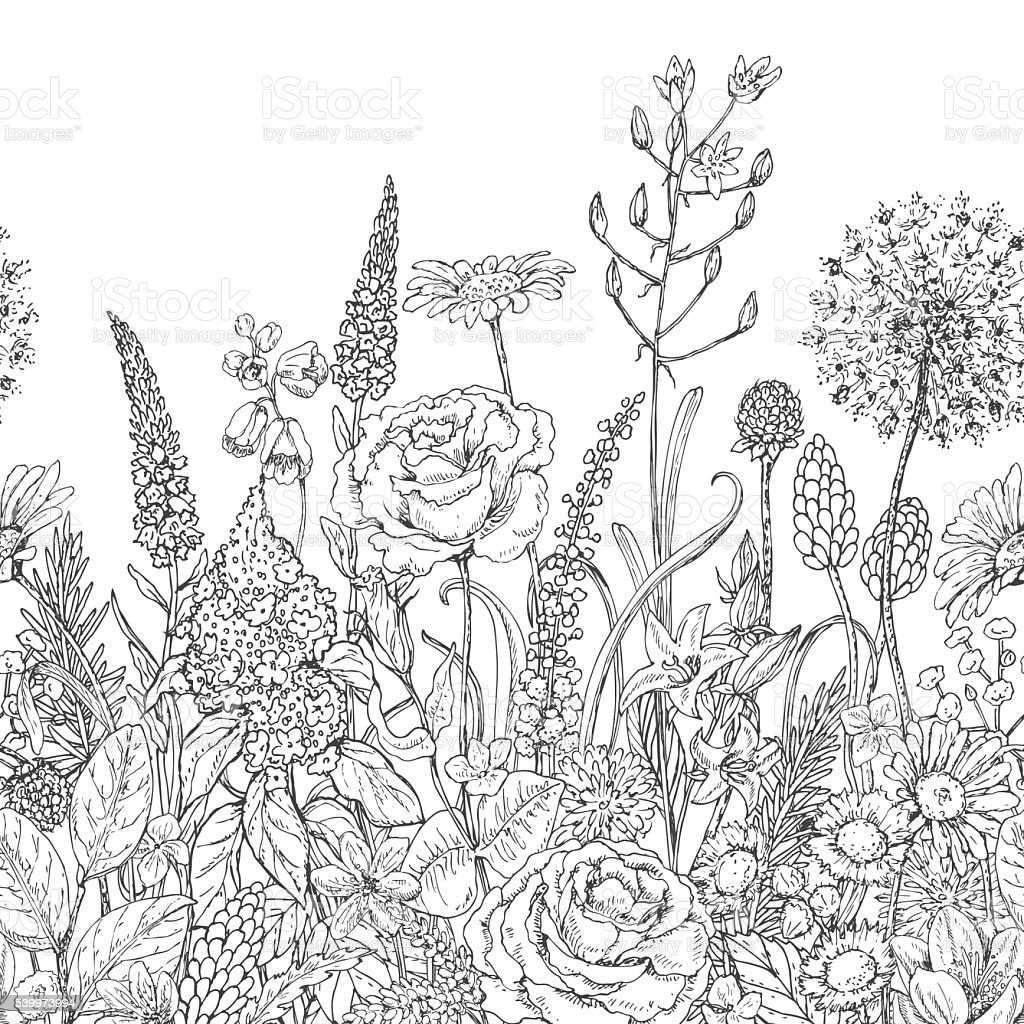 Wildflower Line Drawing : Seamless line pattern with wildflowers stock vector art