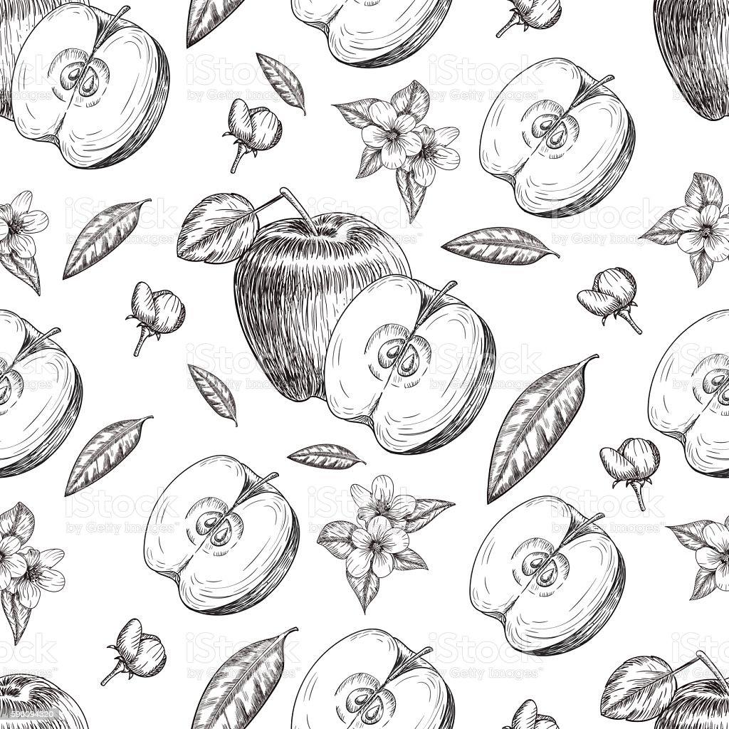 Seamless of hand drawn apple. Vintage sketch style illustration. Organic Lizenzfreies seamless of hand drawn apple vintage sketch style illustration organic stock vektor art und mehr bilder von abnehmen