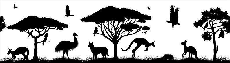 Seamless panorama of Australian plains. Acacia trees and eucalyptus trees. Wildlife of Australia: cockatoo, dingo, echidna, emu, flying fox, galah, eagle, iguana and zebra finch