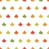 Seamless pattern background maple leaf.