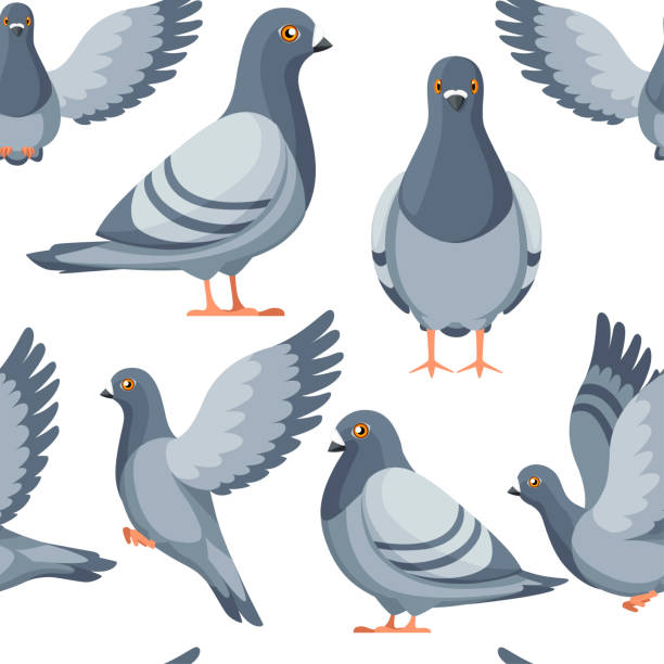 Seamless pattern. Colorful Icon set of Pigeon bird flying and sitting. Flat cartoon character design. Colorful bird icon. Cute pigeon template. Vector illustration on white background Seamless pattern. Colorful Icon set of Pigeon bird flying and sitting. Flat cartoon character design. Colorful bird icon. Cute pigeon template. Vector illustration on white background. pigeon stock illustrations