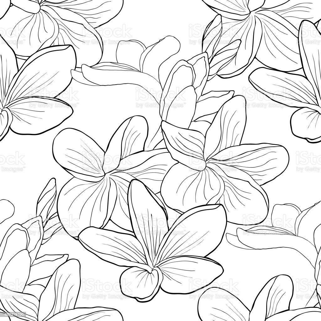 Dikişsiz Desen Bir Egzotik Vektör çizim Hawaii Plumeria çiçek Boyama