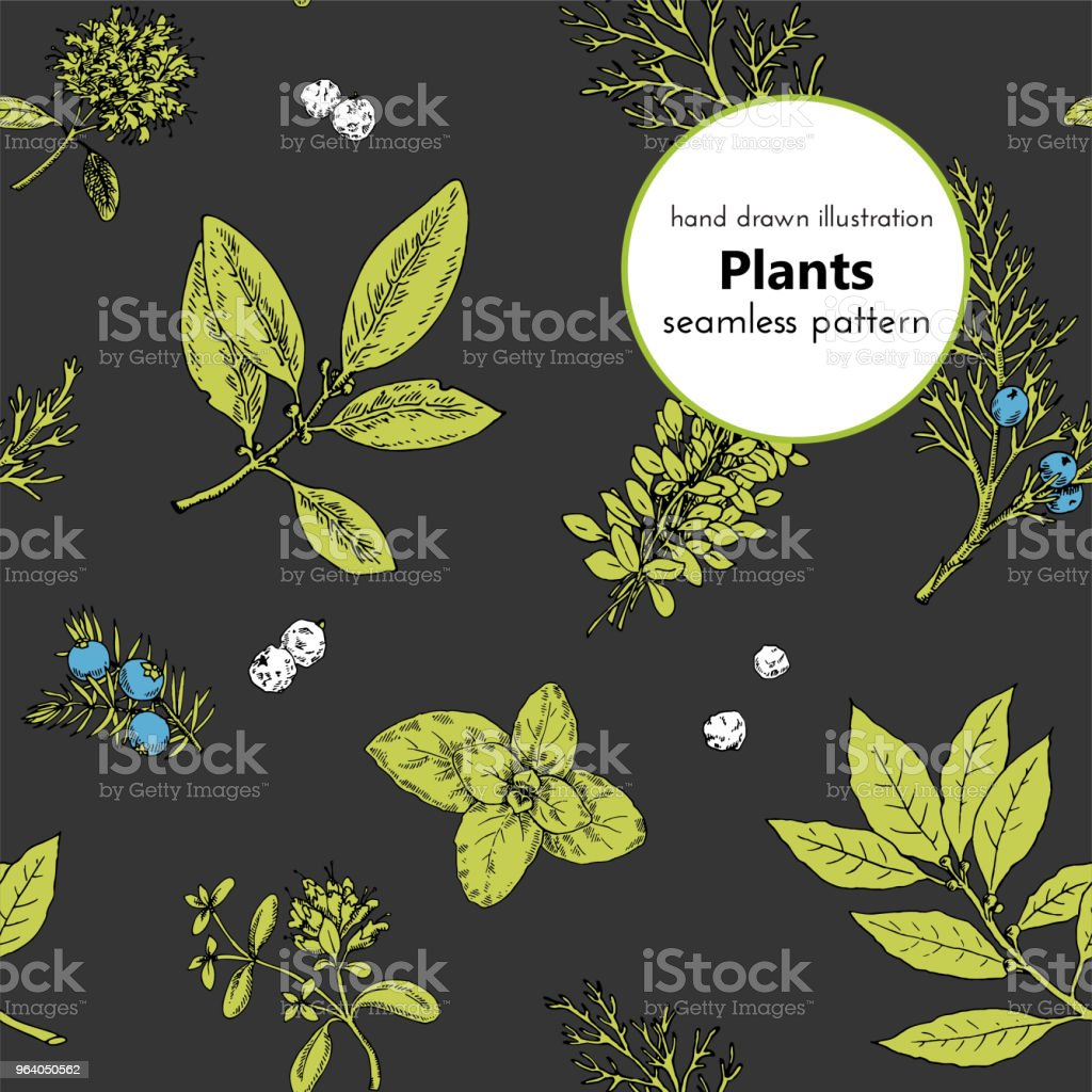 seamless pattern for the design. vector hand drawn graphical illustrations with plants and spices. - Royalty-free Aromatherapy stock vector