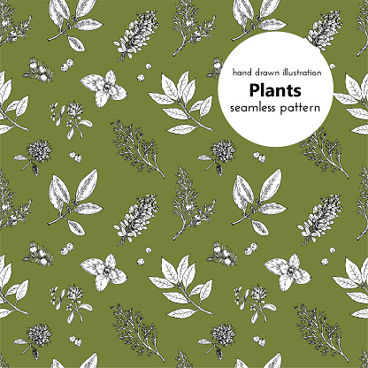 Seamless Pattern For The Design Vector Hand Drawn Graphical Illustrations With Plants And Spices Stock Illustration - Download Image Now