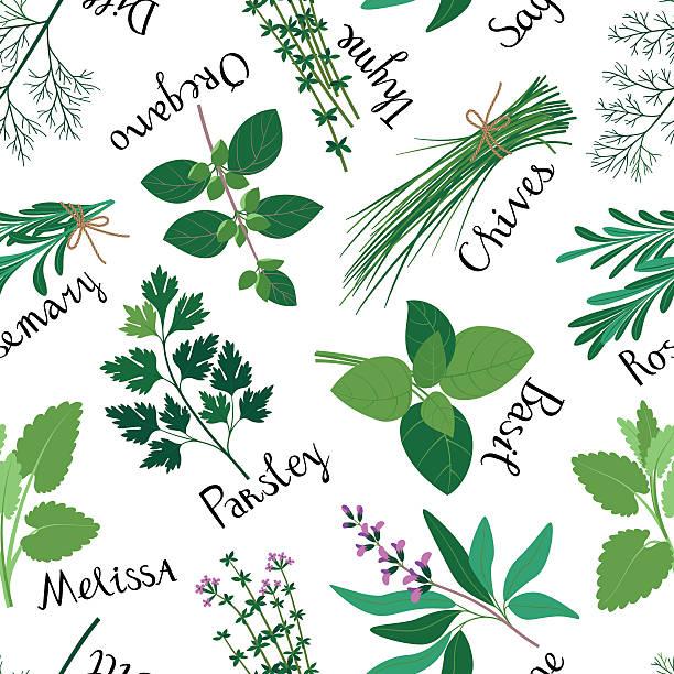 Seamless Pattern Fresh Herbs. vector art illustration