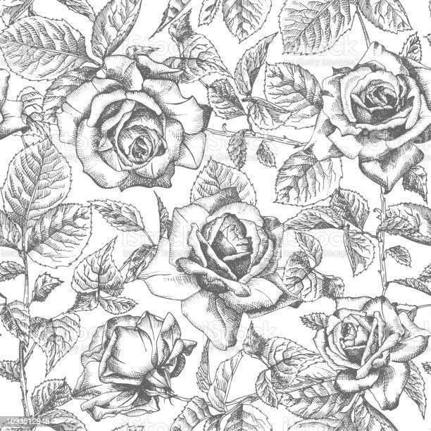 Seamless pattern hand drawn sketch roses detailed vintage botanical vector id1093512948?b=1&k=6&m=1093512948&s=612x612&h=f9uz s9kfye3cncgwvj3abbat4lg0ueoj3uzjmimv1g=