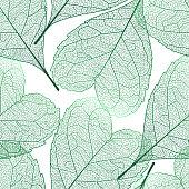 Seamless pattern Heart-shaped leaves.