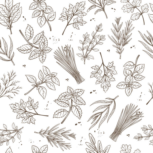 Seamless pattern herbs Seamless pattern with hand drawn sketch herbs and spices for farmers market menu design. Vector background culinary herbs in ink retro style. basil stock illustrations