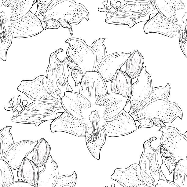 bildbanksillustrationer, clip art samt tecknat material och ikoner med seamless mönster är hippeastrum amaryllis blomma vektorillustration - amaryllis