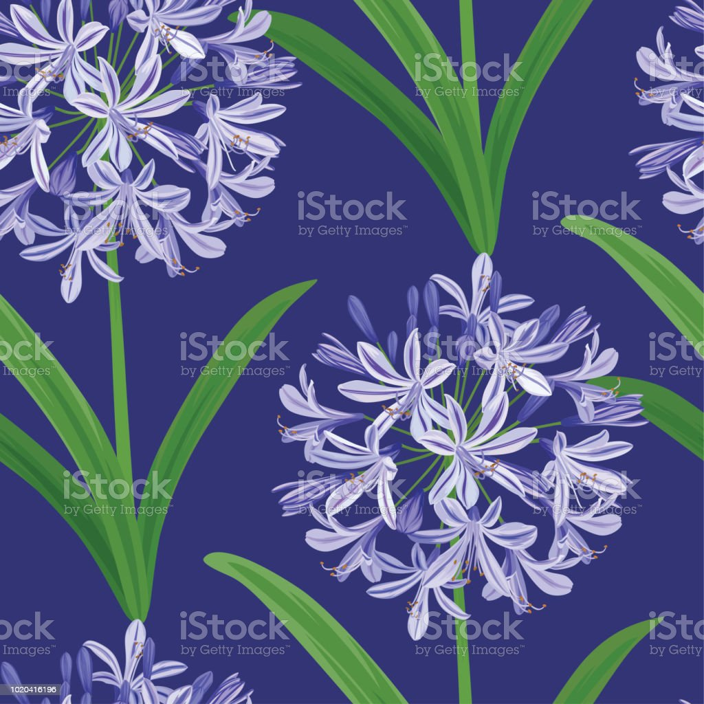 Seamless pattern of Agapanthus or African lily flowers background template. vector art illustration