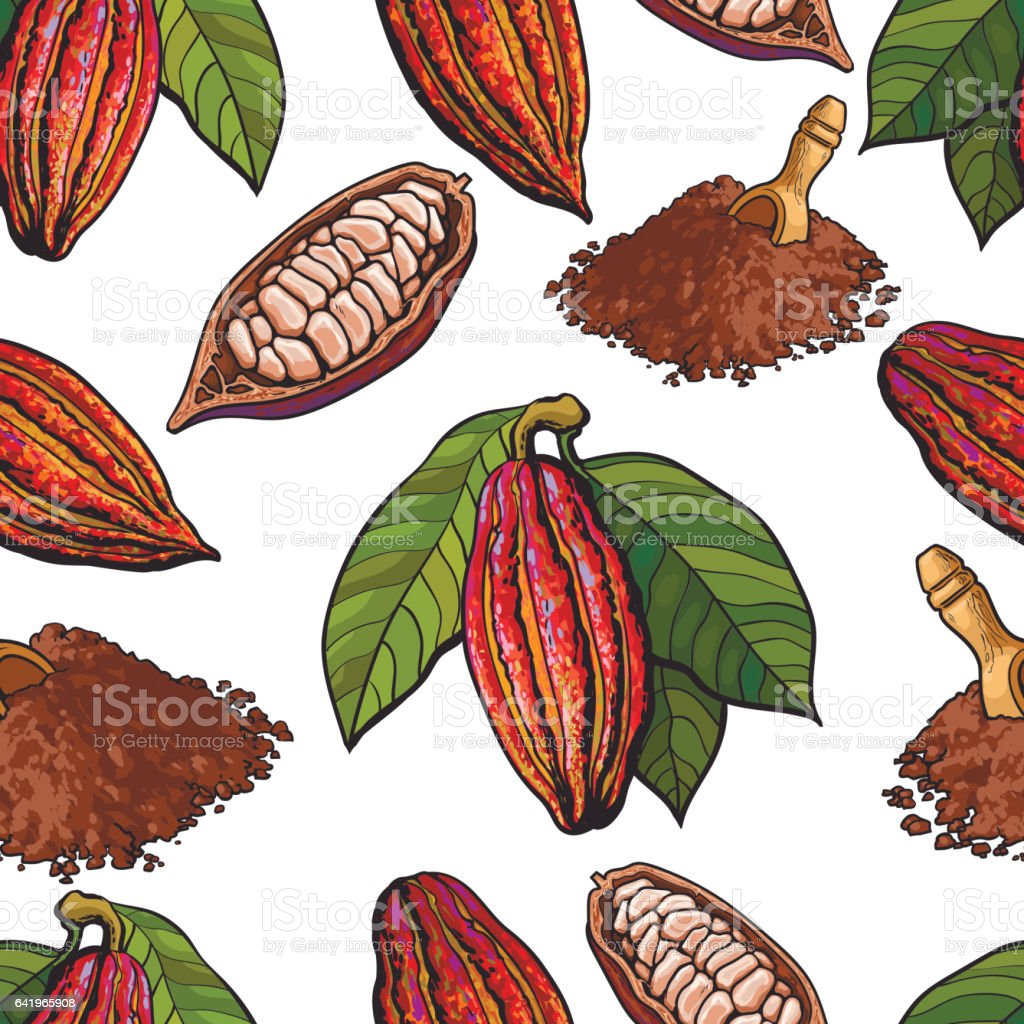 Seamless pattern of cacao fruit, beans, powder on white background vector art illustration
