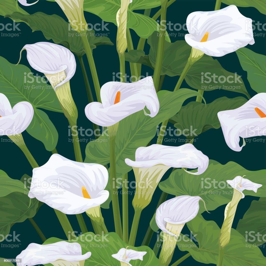 Sans soudure de Calla fleurs avec feuilles de modèle sur fond vert foncé. - Illustration vectorielle