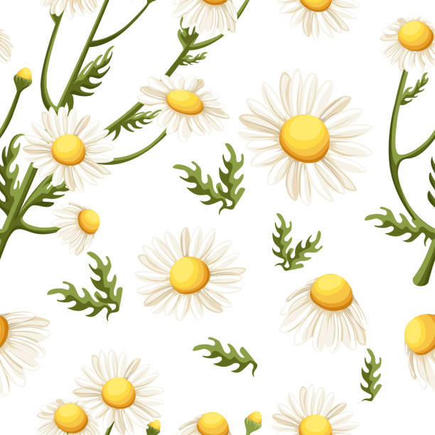 Seamless pattern of Chamomile flowers. Beautiful floral ornament. Vector illustration on white background. Website page and mobile app design Seamless pattern of Chamomile flowers. Beautiful floral ornament. Vector illustration on white background. Website page and mobile app design. chamomile plant stock illustrations