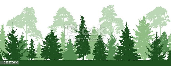Seamless pattern of forest (firs, pines trees), silhouette. Vector