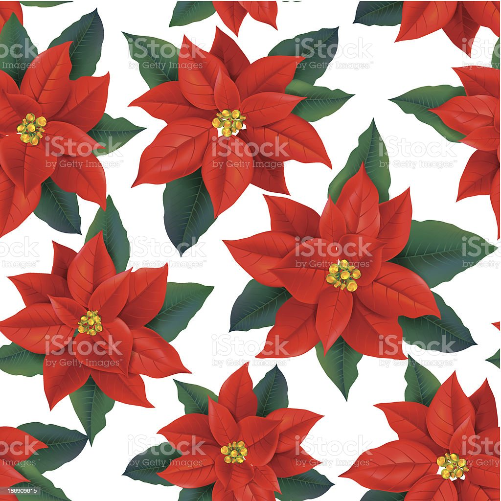 Seamless pattern of red Poinsettia royalty-free stock vector art