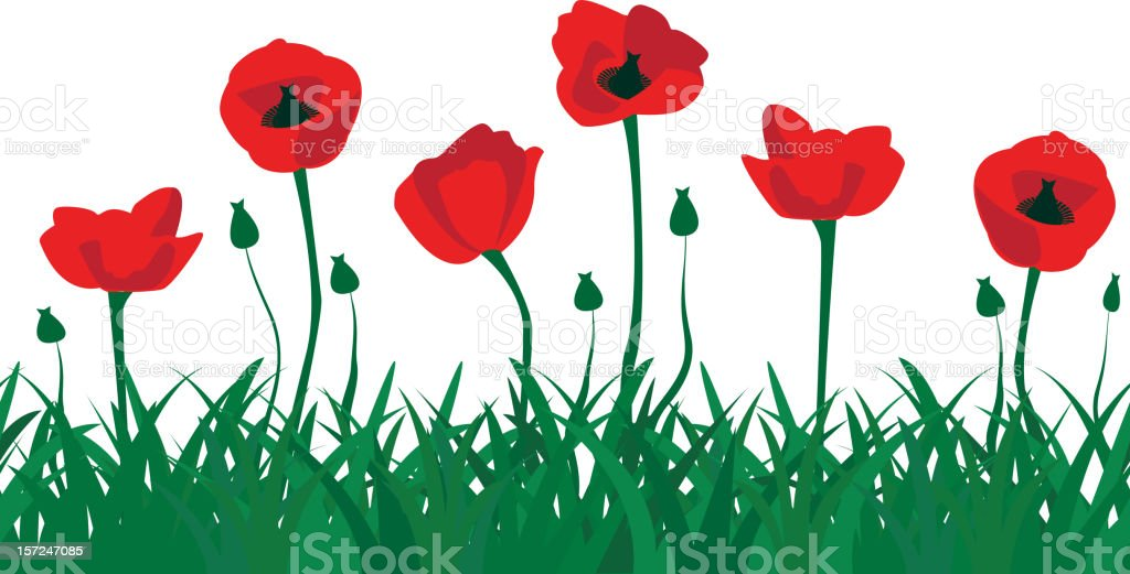 seamless pattern of red poppies royalty-free stock vector art