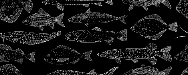 Seamless pattern of school fish, hand drawn. White contour of sea and river fish on black background. Vector illustration.