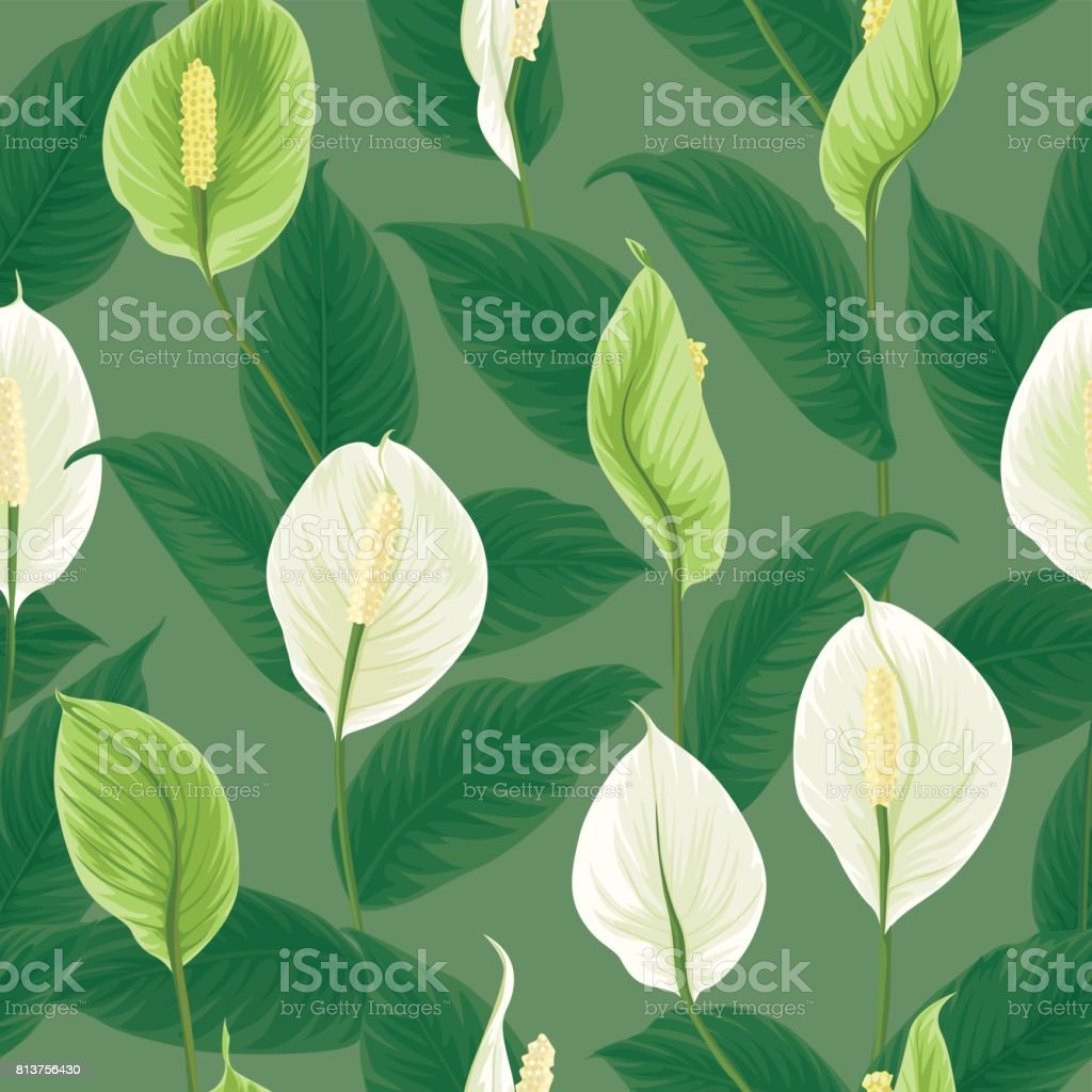 Seamless Pattern Of White And Green Anthurium Flowers With Leaves On