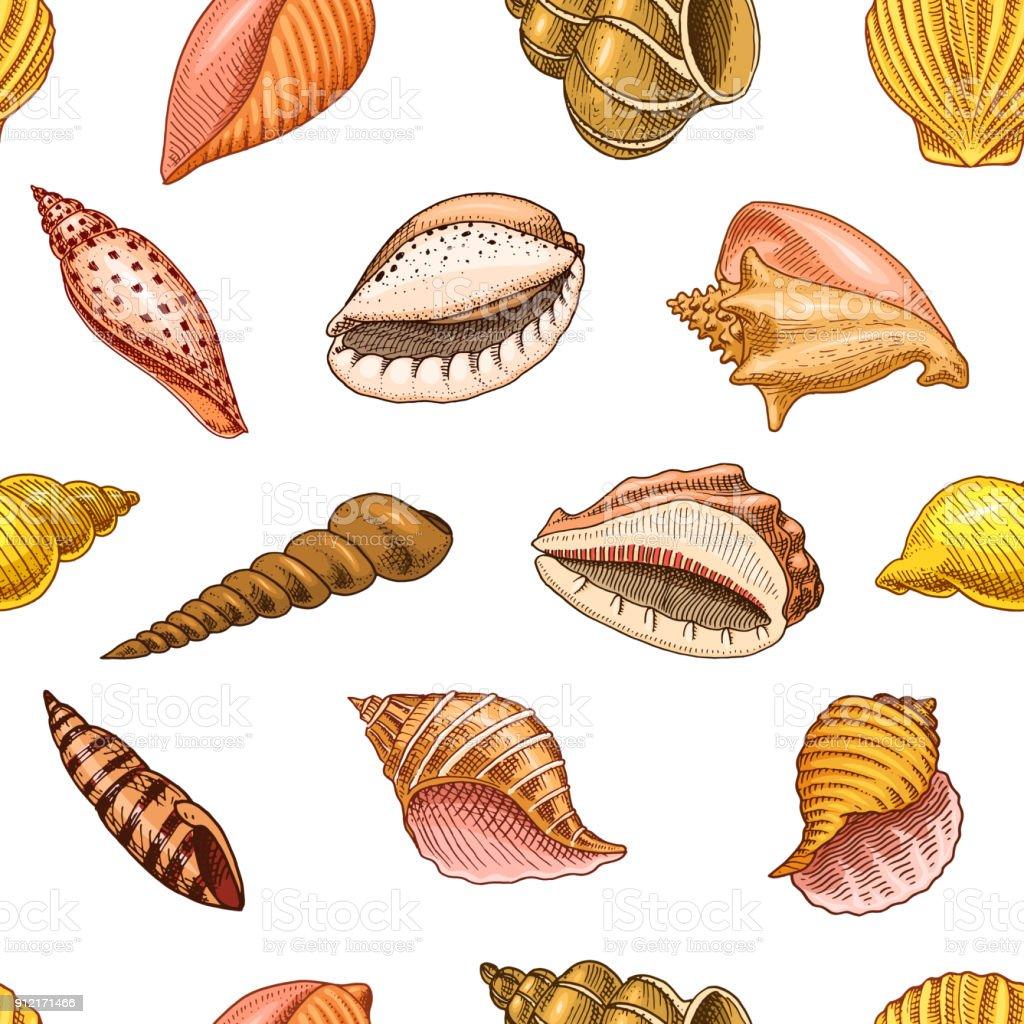 シームレス パターン シェルまたは軟体動物の異なった形態海の生き物刻