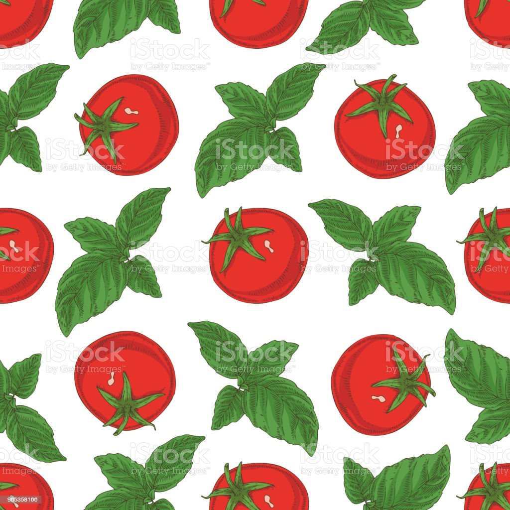 Seamless Pattern. Tomatoes and Basil royalty-free seamless pattern tomatoes and basil stock illustration - download image now