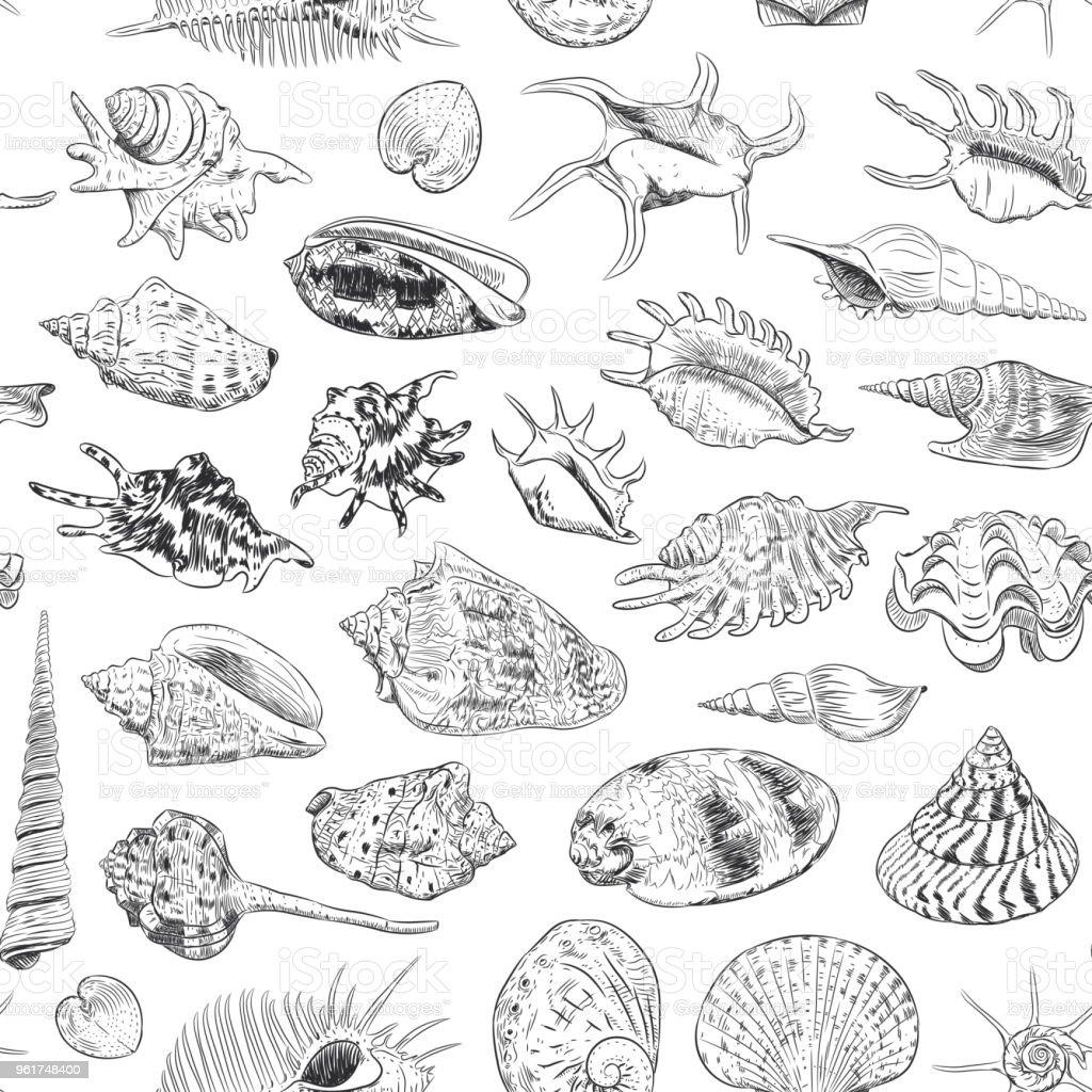seamless pattern Unique museum collection of sea shells rare endangered species, Venus comb murex black contour on white background. Vector vector art illustration